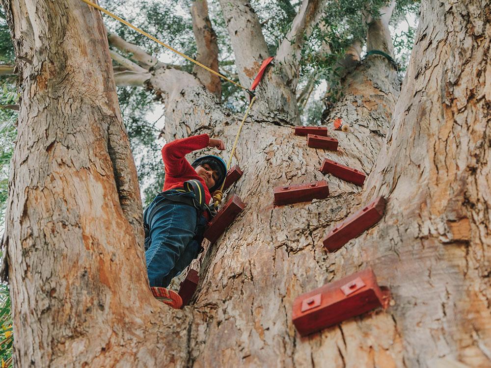 School children climbing tree with Hanmer Adventure